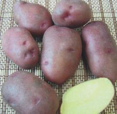 Картофель, купить картофель оптом, сорт Фантазия