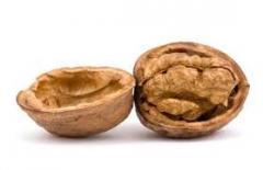 Скорлупы грецкого ореха