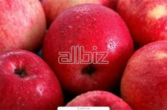 Яблоки зимние оптом