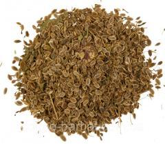 Семена укропа - от 100 кг