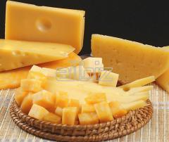 Оборудование для производства твердых сыров