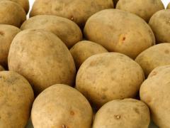 Картофель, продажа, Украина