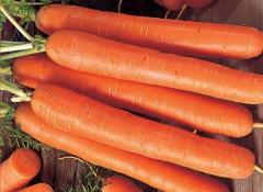 Морковь ранняя купить, цена, Крым, Украина
