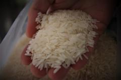 Рис домашний Таиланд
