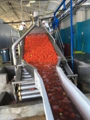 Лінія по переробці томатів Rossi and Catelli повна