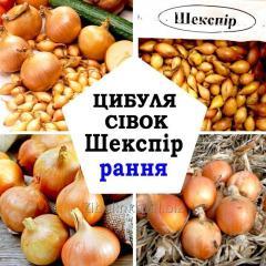 Лук-севок Шекспир, Top Onions, Голландия, 1 кг