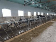 Ограждения кормового стола для телят ОКС.Т.00.000