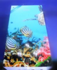 Газовая колонка Dion JSD 10 стекло с дисплеем дымоходная ракушки