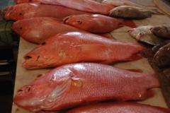 Perch red wholesale (1-4kg)