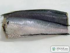 We can offer fresh frozen Hake/hake of Merluccius