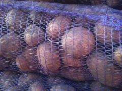Картофель. Сорт АРОЗА.