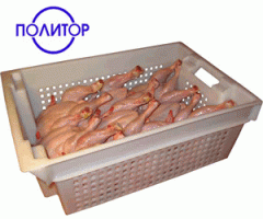 Refrigerated meat of hens