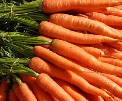 Carrots from the producer