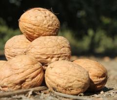 Грецкого ореха саженцы, сорт