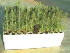 Cartridges for saplings of trees