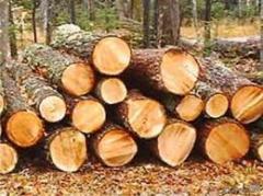 Лес-кругляк