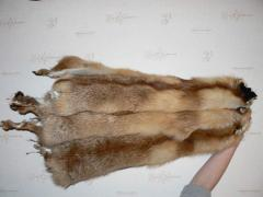 Skin of a red fox