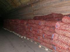 Potatoes pink wholesale