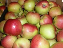 Apples autumn DECOSTA