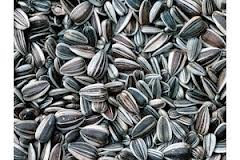 To sunflower seed we import a candy store from