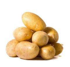 Seed potatoes sale