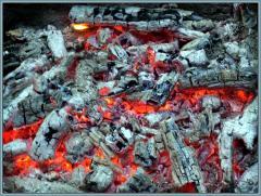 Coal wood ash-tree