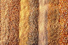 Пшеница, ячмень, гречиха, кукуруза, горох, рапс. Зерно. Семена. Опт опо Украине