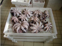 Trays for fish