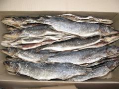 Pike dried