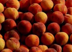 Персики свежие оптом от 3 т. Одесская обл.
