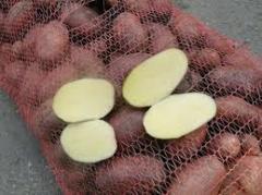 Potato wholesale