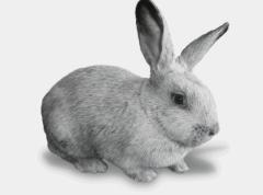 Кролики породы Серебристый Европейський, продажа