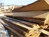 Boards from different breeds of wood to buy in