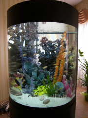 Service of aquariums of any complexity.