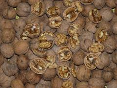 Walnut in shell, integral walnut, export of walnut from Ukraine.