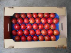 Apple Aydared wholesale 7+, 8+. To buy winter