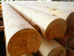 The rounded log (pine)