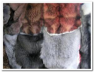 Skin of raccoon, fur, perforation