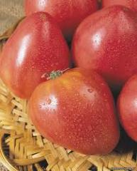 Семена помидоров Кудесник