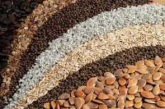 Семена овощных культур,чернушки халцедон