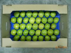 Semerenko's apples wholesale. To buy apples