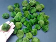 Cladophora aegagropila Moss ball Marimo moss ball