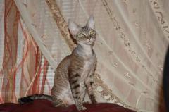 Cats east, Anita is the champion of Ukraine