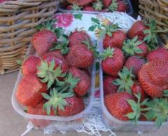 Grade strawberry sapling Capital