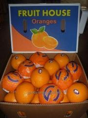 Orange, citrus from the Egyptian producer