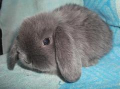 Rabbits decorative