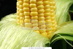 Kukurudza is swee