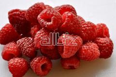 Fresh-frozen raspberry