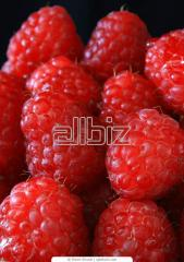 Berries: the raspberry frozen