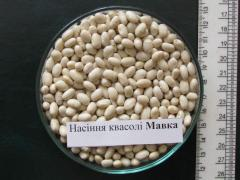 Haricot commodity Mavka